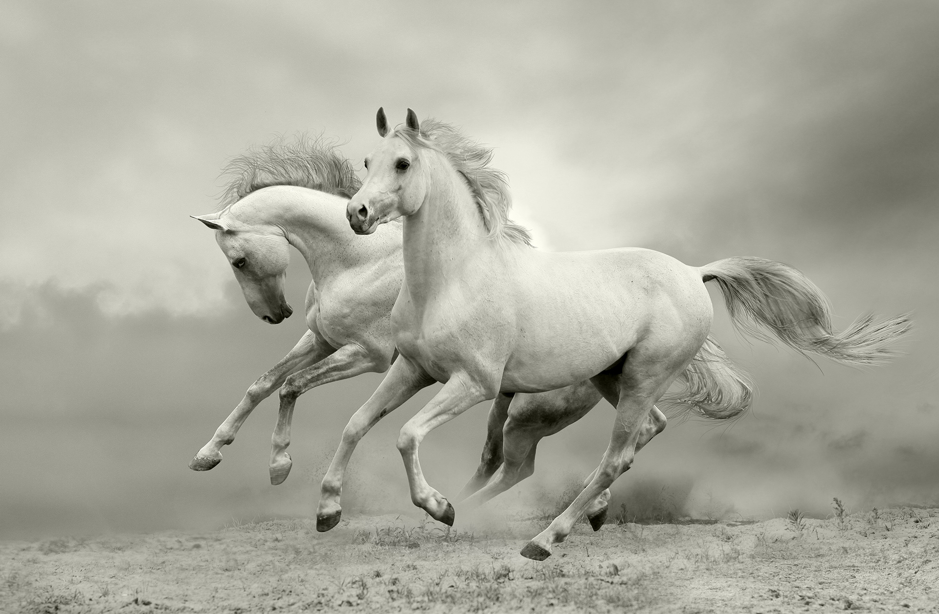Horse-Homepage-02-Background
