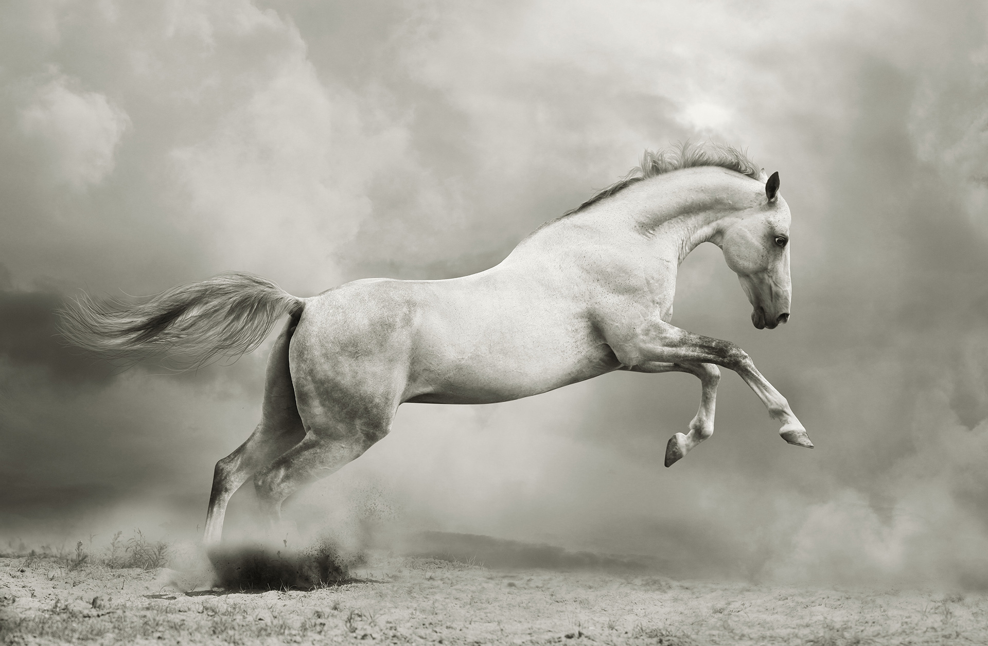 Horse-Homepage-Background